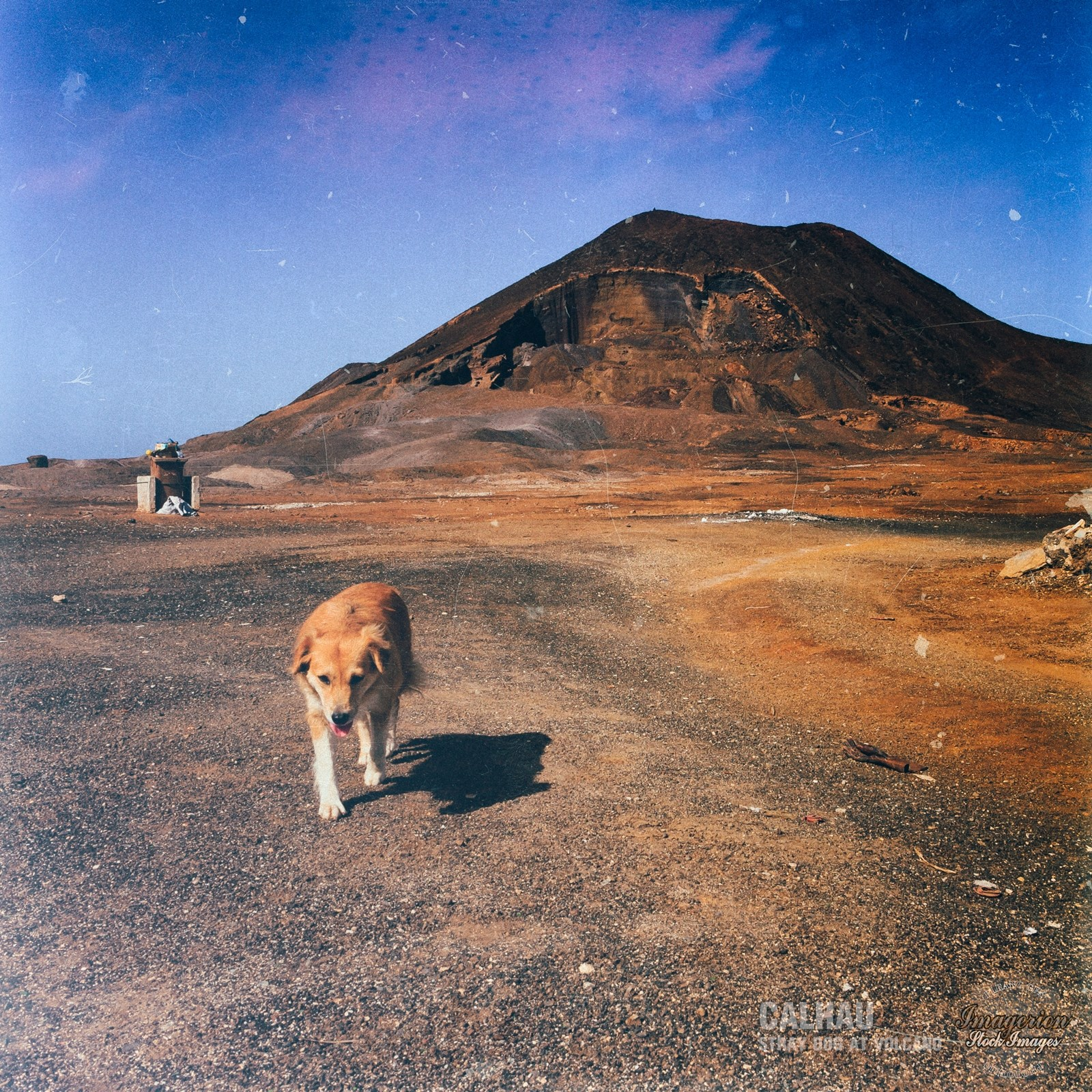 Stray dog walking near the volcano
