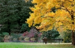Image of autumn. Lonely man under the tree in Autumn