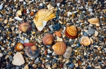 Image of shells. Shells and shingles