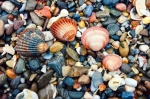 Image of beach. Seashells and stones