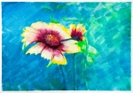 Image of flowers. Flowers – watercolor painting – Zinnia