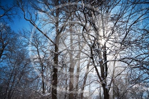 Sunbeam bursts through the trees