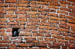 Image of bricks. Brick wall and Jackdaw