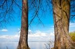 Image of Masuria. Large trees, blue lake and sky