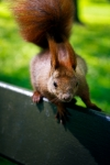 Image of animals. Crazy squirrel look