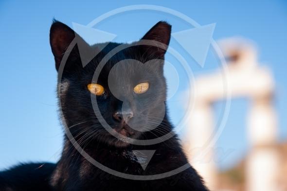 Bastet representation, black cat