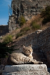Image of cats. Tabby Cat resting