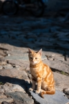 Image of homeless. Red tabby street cat