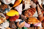 Image of seashell. Colorful sea shells