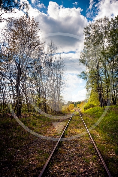 Railroad track in the forest