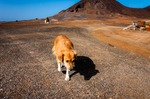 Image of stray. Stray dog walking