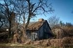 Image of barn. Wild nature taking over a wooden barn