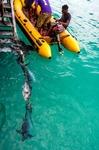 Image of tuna. Fishermen fresh tuna fish catch
