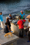 Image of fishing. Ponta do Sol villagers buying  freshly caught fish right in the port, Cape Verde