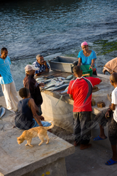 Ponta do Sol villagers buying  freshly caught fish right in the port, Cape Verde