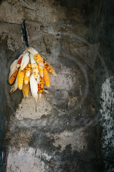 Drying corn cob hanging on the wall of a poor village