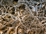 Image of roots. Roots